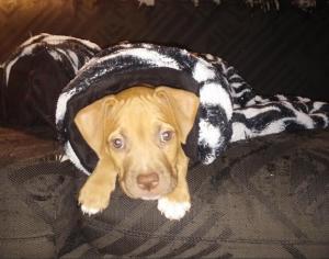 cena in my blanket